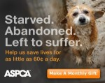 PLEASE HELP! DONATE to the ASPCA